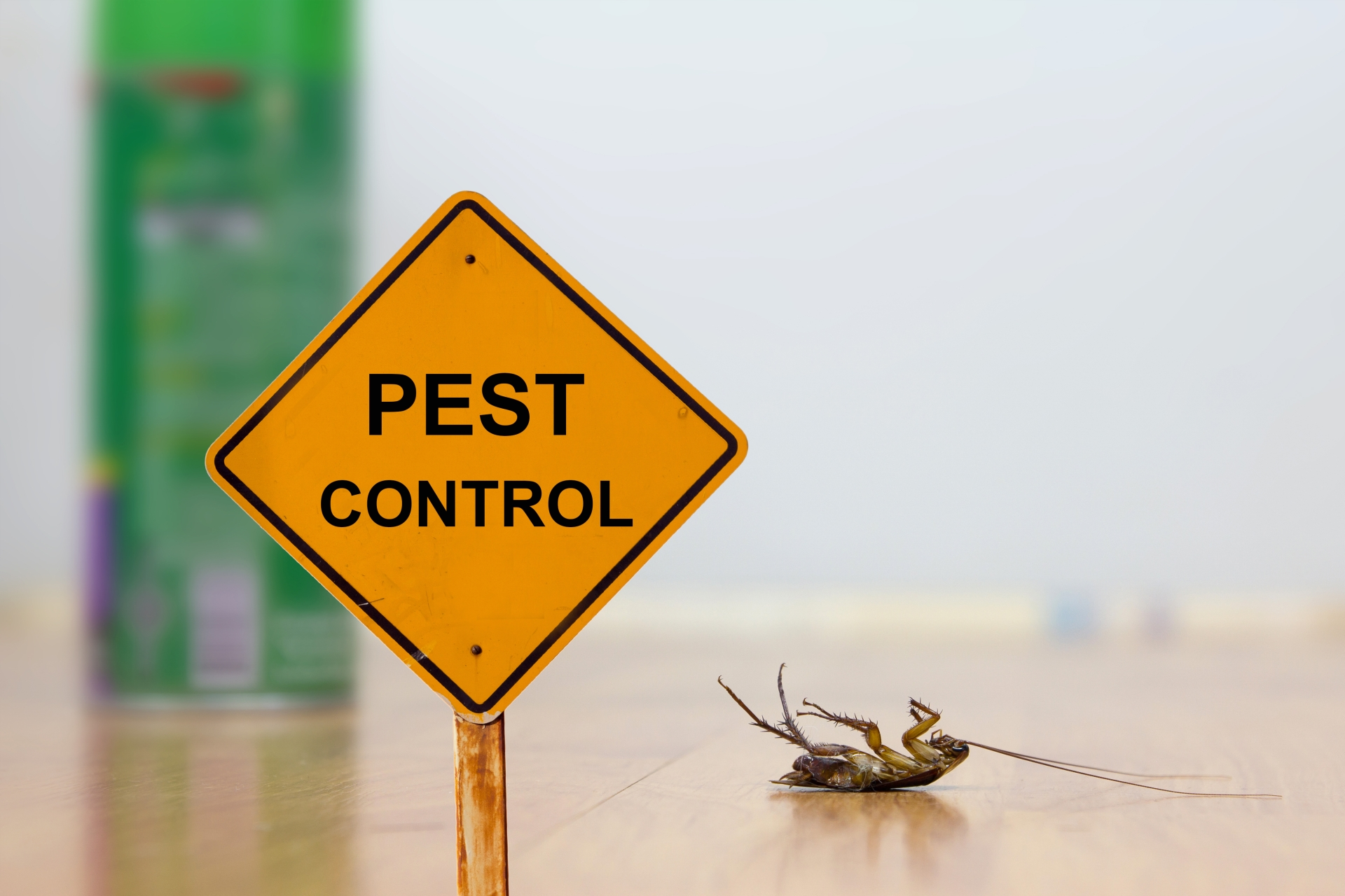 24 Hour Pest Control, Pest Control in Paddington, W2. Call Now 020 8166 9746