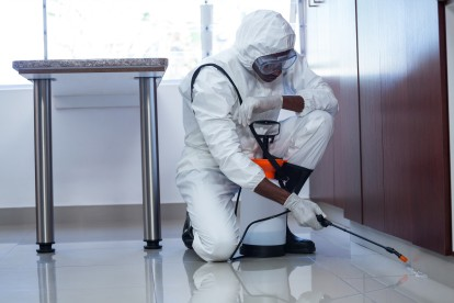 Emergency Pest Control, Pest Control in Paddington, W2. Call Now 020 8166 9746